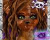 Calico Cat Hair