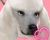 Poddle Dog [White]Drv♦