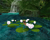 Water Lillies 8 pose