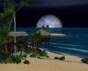 !Tropical Night Beach