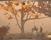 BRS! Autumn Tree Swing