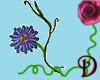 [D] Passionfruit Flower