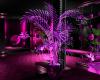 (M) Pink Club Plant 3