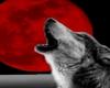 Howl @ The Moon