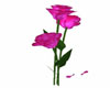 Animated Pink Roses