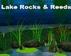 Lake Rocks & Reeds