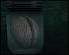 \/ Brain Specimen Jar
