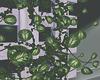 New Ivy Plants.1