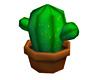 Catus Plant