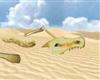 Tatooine Dragon Skeleton