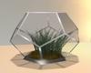 ღ Pentagon Vase Plant