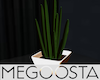 Arizonan Cactus