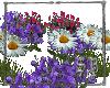 SB Flower Garden