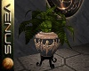 ~V~Dragon Pot - Fern