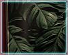 ○ Tropical Frame II