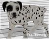 H. Dalmation Dog