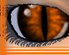 Burnt Orange Eyes
