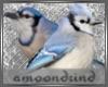AM:: Bluejay Enhancer