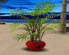 ~TQ~Der Willow Plant