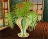 Tropix plant