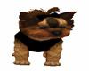 pup coat black