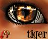 Wild.Eyes Tiger (m)