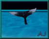 (A) Humpback Whale Tail