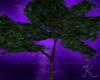 Woodland Summer Tree