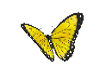 Yellow Butterfly Swarm