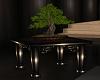 Bonsai tree table