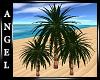 ANG~Three Palm Trees