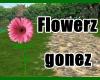 KP bloom flowerz/gonez