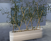 Plant Bamboo 2