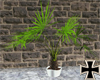 [RC] Palm