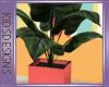 Sunshine Plant