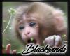 Monkey Bamboo Pic V.9