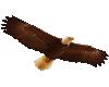 TF* Flying Eagle