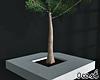 Concrete Tree Minimal
