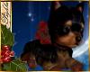 I~Yorkie*Holiday Bow