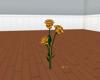 LB59s Gold Ani Roses