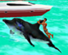 Dolphin Rides n Sounds