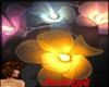 ~Lights Flowers
