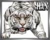 H►White tiger M/F
