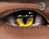 Feline Golden Eyes M