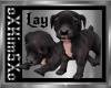 [K] Pitbull pup Black