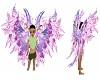 Oto's Purple Angel wings