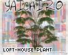 Loft-House Plant