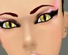 Golden Cat Eyes Female