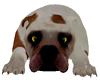 DOG (furnitur)