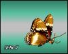 D- Golden Butterfly